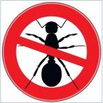 Barrie Pest