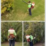 Petty Pest Control Services