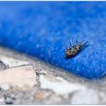 Purity Pest Control