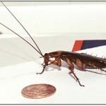 Pretty Pest Control Services